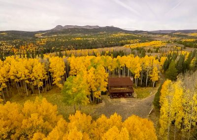 section-cabin-gold-trees